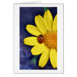 Ladybird on Flower Card
