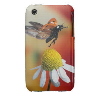 ladybird on flower iPhone 3 cases