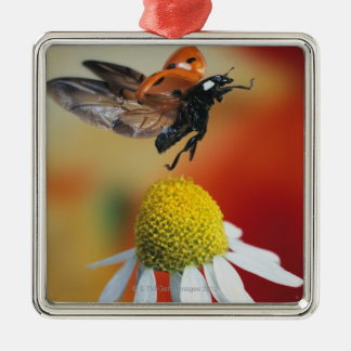 ladybird on flower metal ornament