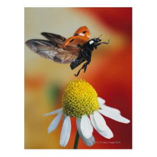 ladybird on flower postcard