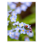 Ladybird on Forget-me-not Print 5x7""