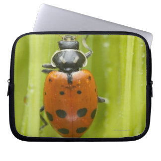Ladybird on grass, close-up computer sleeve