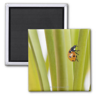 Ladybird on plant stems 2 inch square magnet