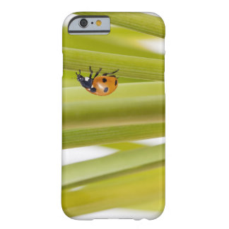 Ladybird on plant stems barely there iPhone 6 case