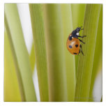 Ladybird on plant stems ceramic tiles