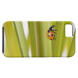 Ladybird on plant stems iPhone 5 cover