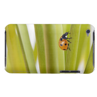 Ladybird on plant stems iPod touch covers