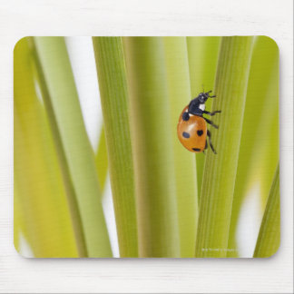 Ladybird on plant stems mouse pads