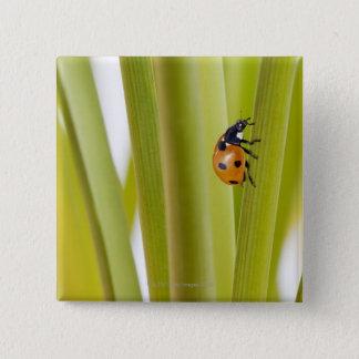 Ladybird on plant stems pinback button