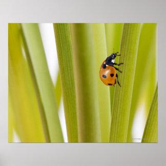 Ladybird on plant stems print