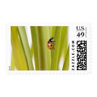 Ladybird on plant stems stamp