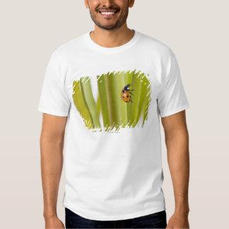 Ladybird on plant stems t-shirt