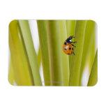Ladybird on plant stems vinyl magnets