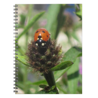 Ladybird Photo Note Book Black And White Lined