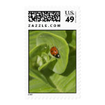 Ladybird Postage