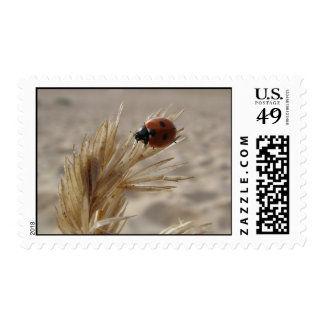 Ladybird Stamp