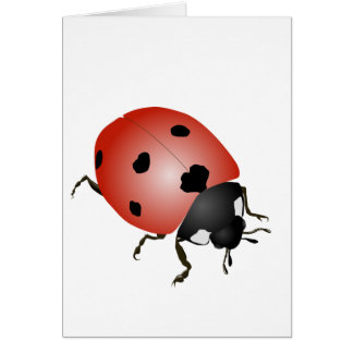 Ladybird - talismans cards