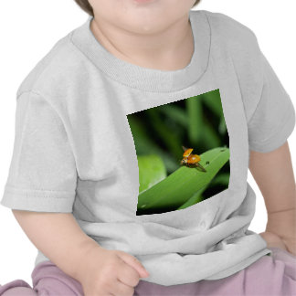 ladybird t shirts