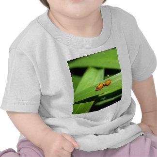 ladybird tees