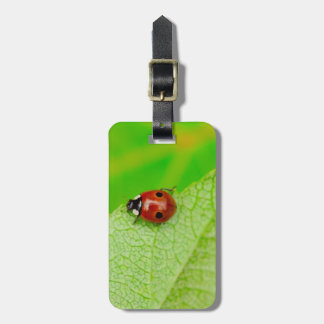 Ladybird walking across a leaf bag tag