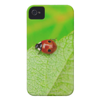 Ladybird walking across a leaf iPhone 4 covers