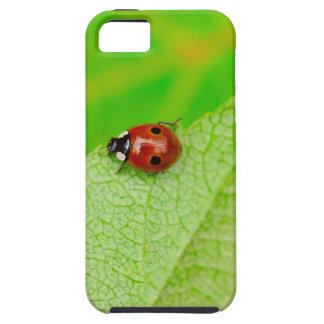 Ladybird walking across a leaf iPhone SE/5/5s case