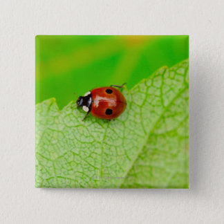 Ladybird walking across a leaf pinback button