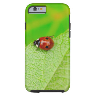 Ladybird walking across a leaf tough iPhone 6 case