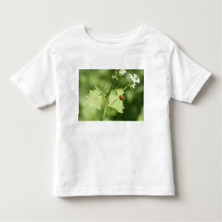 Ladybirds fly… toddler t-shirt