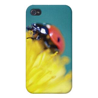 ladybug1 [borderless] case for iPhone 4