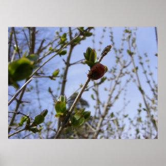 Ladybug 1 poster