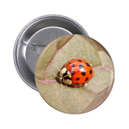 Ladybug 226 ~ button
