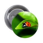 Ladybug 2 Inch Round Button