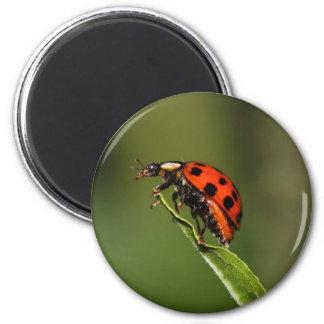 Ladybug 2 Inch Round Magnet