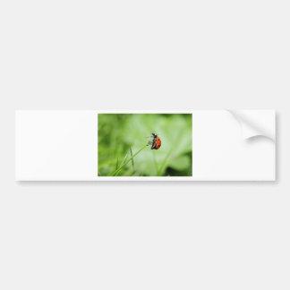 ladybug-796 bumper sticker