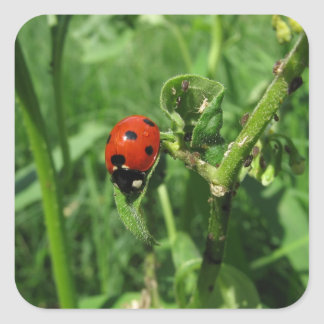 Ladybug and Aphids Square Sticker