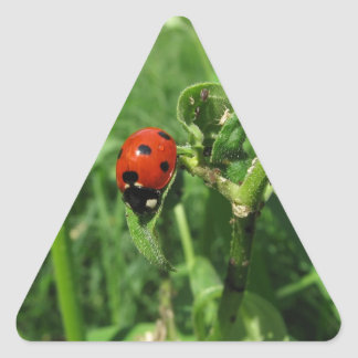 Ladybug and Aphids Triangle Sticker