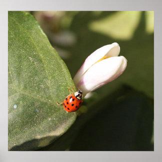 Ladybug and Blossom on Canvas Print