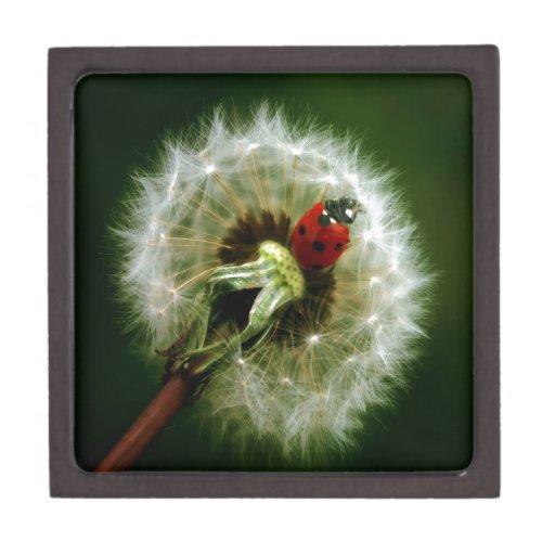 Ladybug And Dandelion Premium Keepsake Boxes