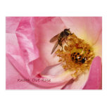 Ladybug and Fly on a Knock Out Rose Postcards