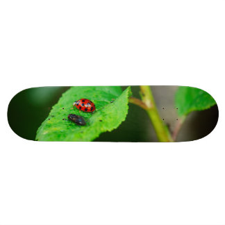 Ladybug and fly on a leaf macro skate deck