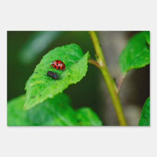 Ladybug and fly on a leaf macro lawn signs