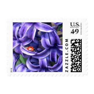 Ladybug And Hyacinth Stamp