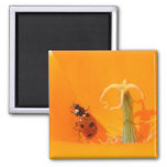 Ladybug and Poppy Refrigerator Magnets