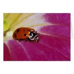 Ladybug Beetle. (Hippodamia convergens) Card