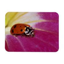 Ladybug Beetle. (Hippodamia convergens) Magnet