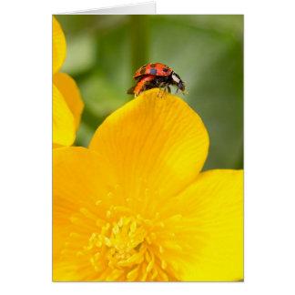 Ladybug Blank Greeting Card