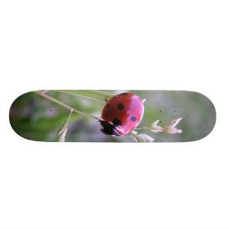Ladybug board skate deck