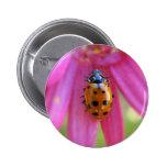 Ladybug Button