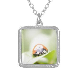 Ladybug by Tutti Jewelry